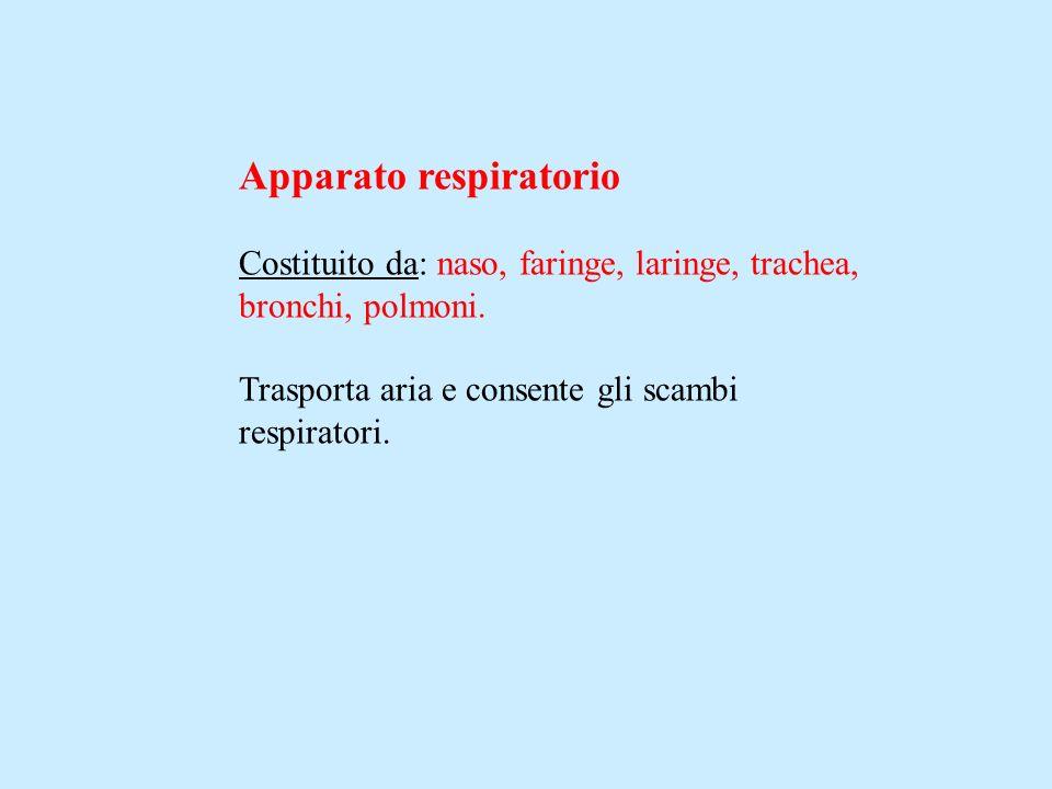 Apparato respiratorio Costituito da: naso, faringe, laringe, trachea, bronchi, polmoni. Trasporta aria e consente gli scambi respiratori.