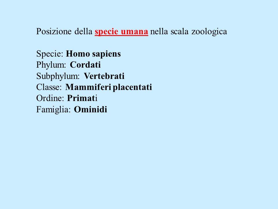 Posizione della specie umana nella scala zoologica Specie: Homo sapiens Phylum: Cordati Subphylum: Vertebrati Classe: Mammiferi placentati Ordine: Pri
