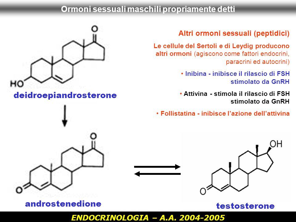 ENDOCRINOLOGIA – A.A. 2004-2005 Ormoni sessuali maschili propriamente detti testosterone androstenedione deidroepiandrosterone Altri ormoni sessuali (