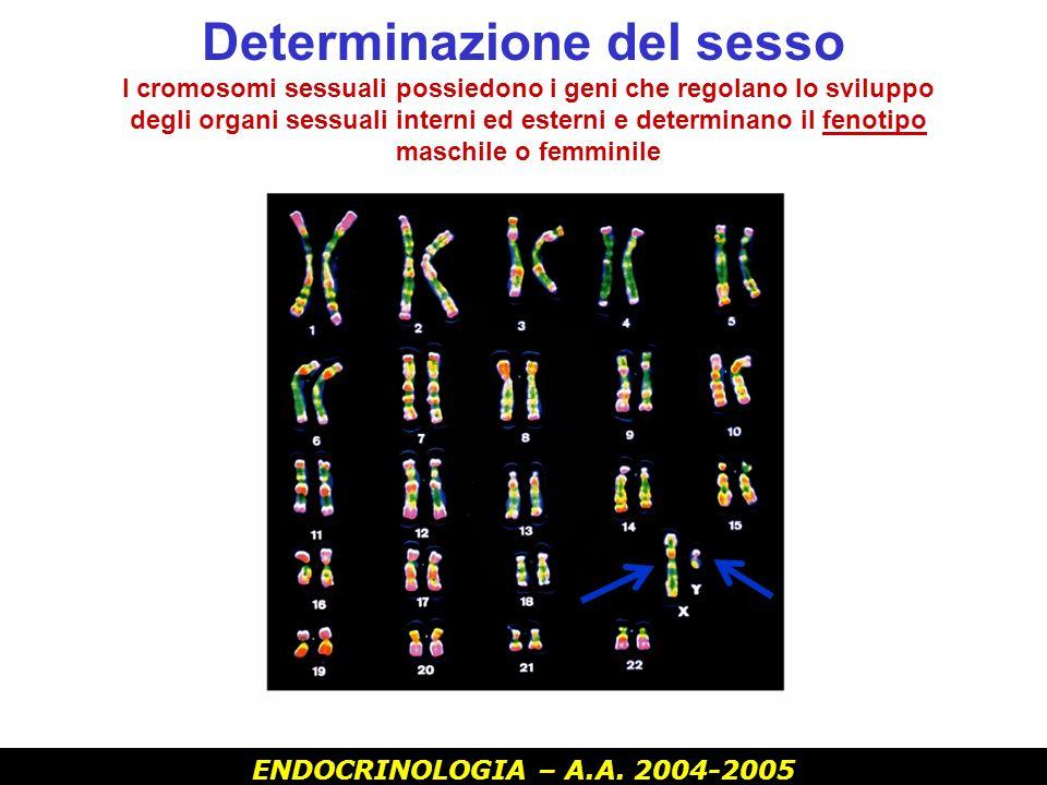 ENDOCRINOLOGIA – A.A. 2004-2005 Maschio XY Y contiene i geni SRY Femmina XX - Sesso genetico