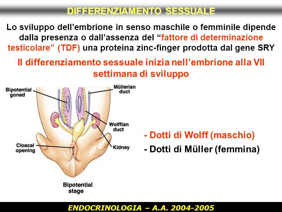 ENDOCRINOLOGIA – A.A. 2004-2005 Lo sviluppo dellembrione in senso maschile o femminile dipende dalla presenza o dallassenza del fattore di determinazi