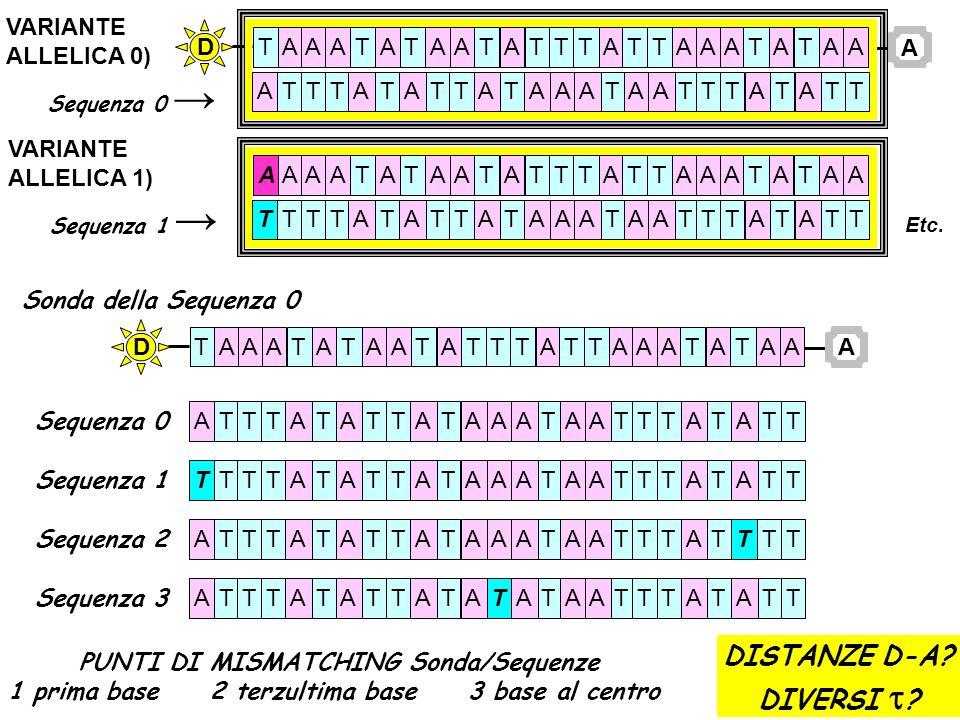 VARIANTE ALLELICA 0) Sequenza 0 A TTAAAAAAAAAAAAATTTTTTTTAT ATTTTTTTTTTTTTAAAAAAAAATA D TAAAAAAAAAAAAAATTTTTTTTAT TTTTTTTTTTTTTTAAAAAAAAATA VARIANTE A