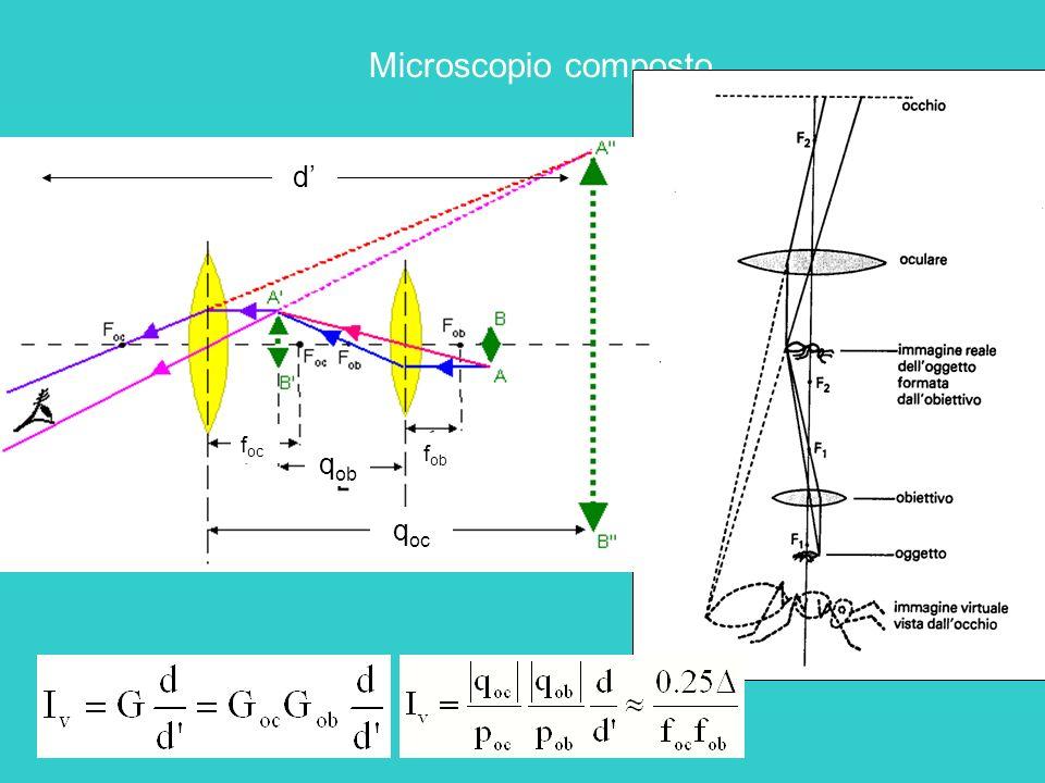 Microscopio composto d q ob q oc f oc f ob