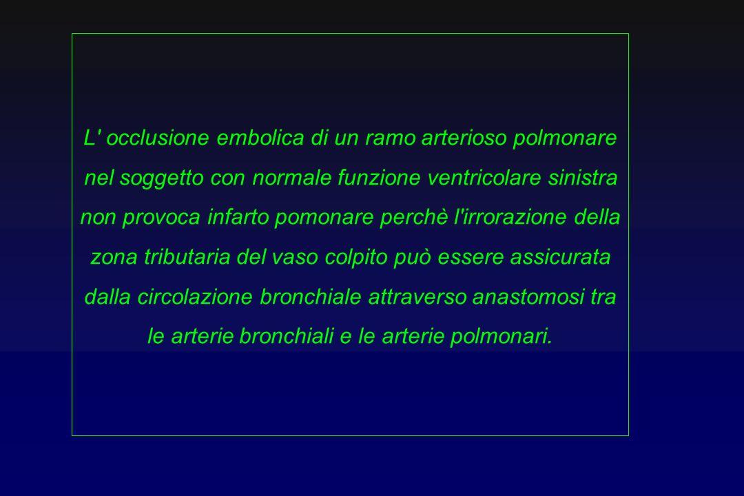 L' occlusione embolica di un ramo arterioso polmonare nel soggetto con normale funzione ventricolare sinistra non provoca infarto pomonare perchè l'ir