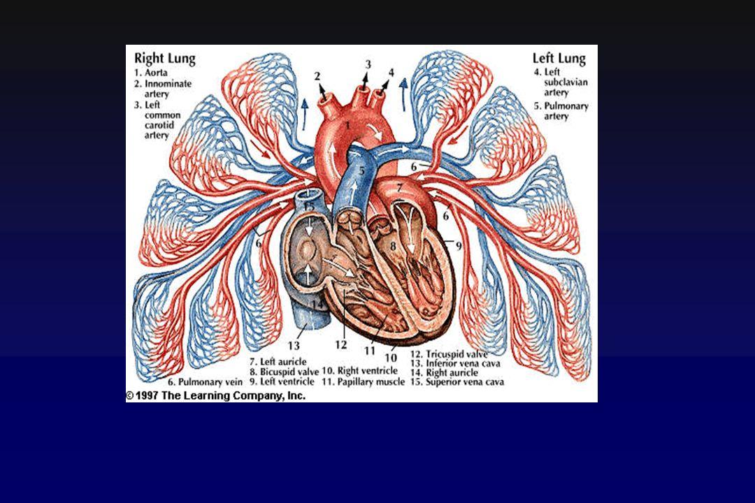 Angiografia polmonare arterie vene