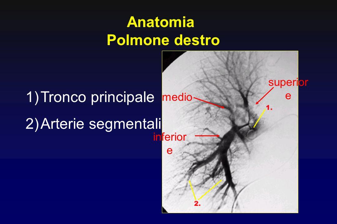 1)Tronco principale 2)Arterie segmentali Anatomia Polmone destro inferior e medio superior e