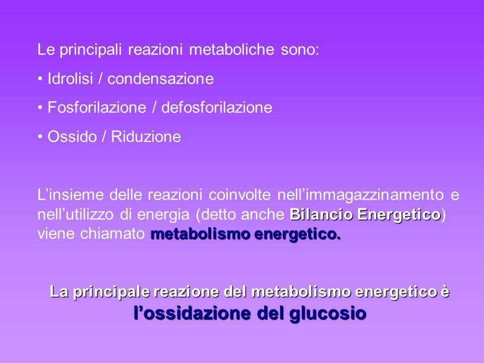 Le principali reazioni metaboliche sono: Idrolisi / condensazione Fosforilazione / defosforilazione Ossido / Riduzione Bilancio Energetico metabolismo