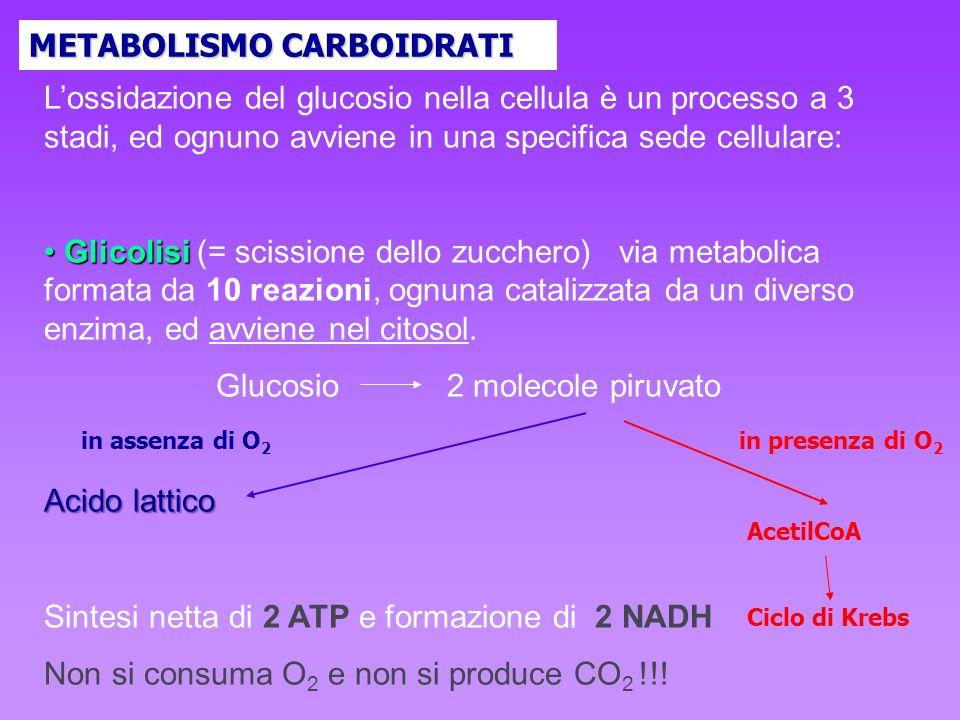 Lossidazione del glucosio nella cellula è un processo a 3 stadi, ed ognuno avviene in una specifica sede cellulare: Glicolisi Glicolisi (= scissione d
