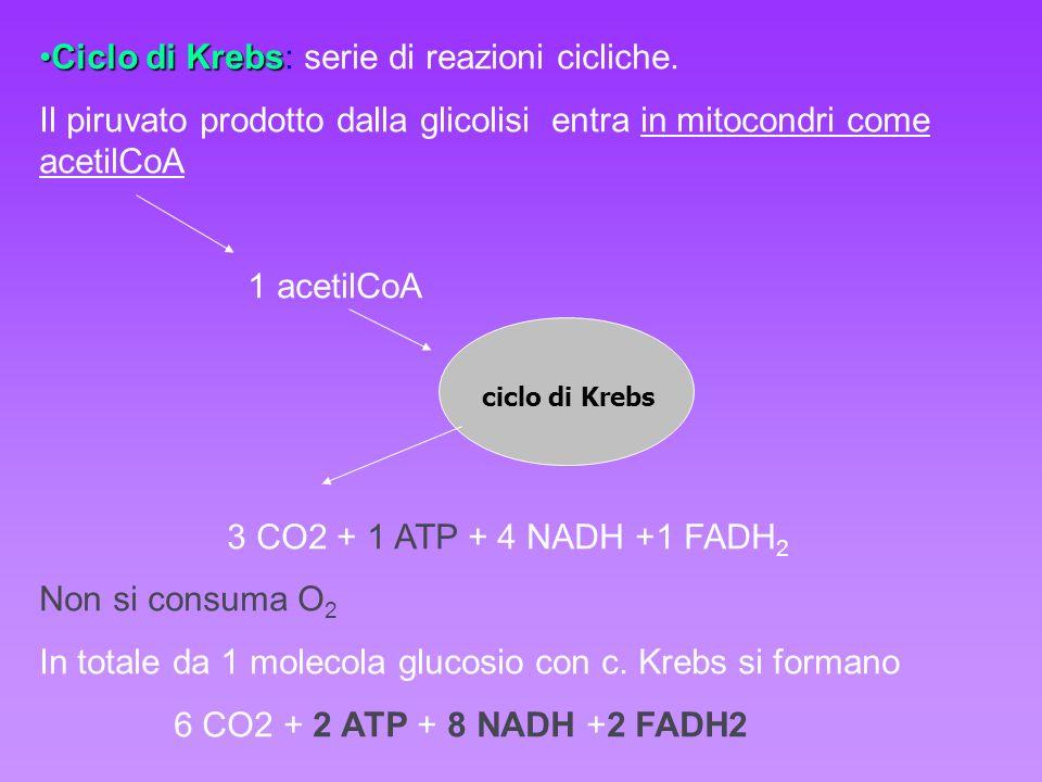 Ciclo di KrebsCiclo di Krebs: serie di reazioni cicliche. Il piruvato prodotto dalla glicolisi entra in mitocondri come acetilCoA 1 acetilCoA 3 CO2 +