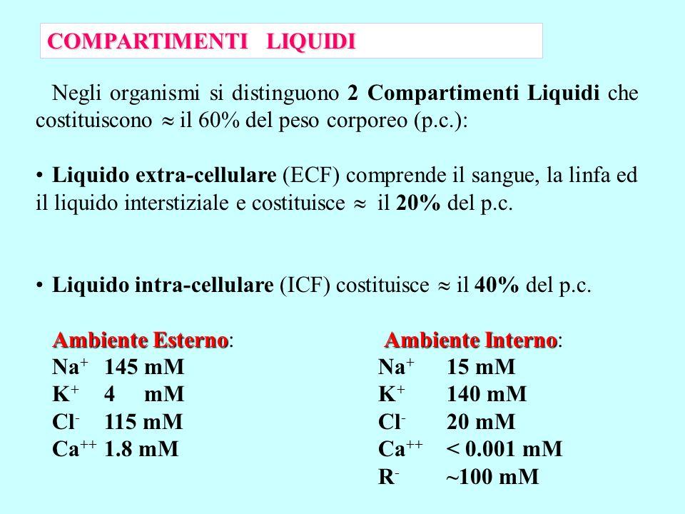 Negli organismi si distinguono 2 Compartimenti Liquidi che costituiscono il 60% del peso corporeo (p.c.): Liquido extra-cellulare (ECF) comprende il s