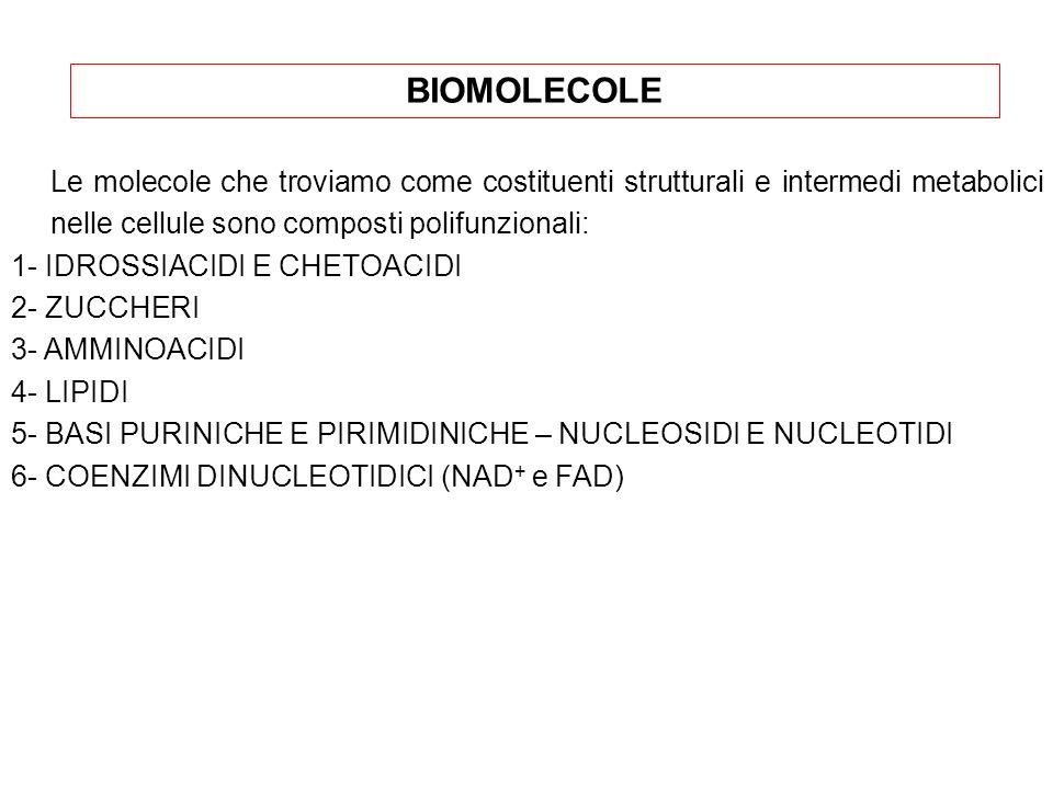 BIOMOLECOLE Le molecole che troviamo come costituenti strutturali e intermedi metabolici nelle cellule sono composti polifunzionali: 1- IDROSSIACIDI E