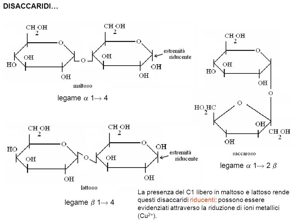 DISACCARIDI… legame 1 4 legame 1 2 La presenza del C1 libero in maltoso e lattoso rende questi disaccaridi riducenti: possono essere evidenziati attra