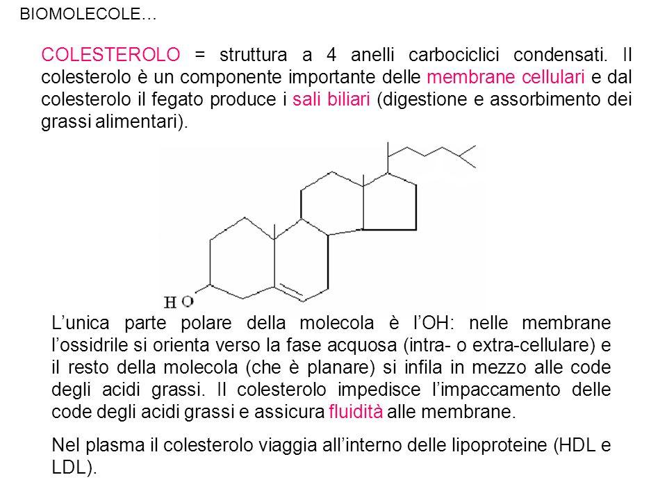 COLESTEROLO = struttura a 4 anelli carbociclici condensati. Il colesterolo è un componente importante delle membrane cellulari e dal colesterolo il fe