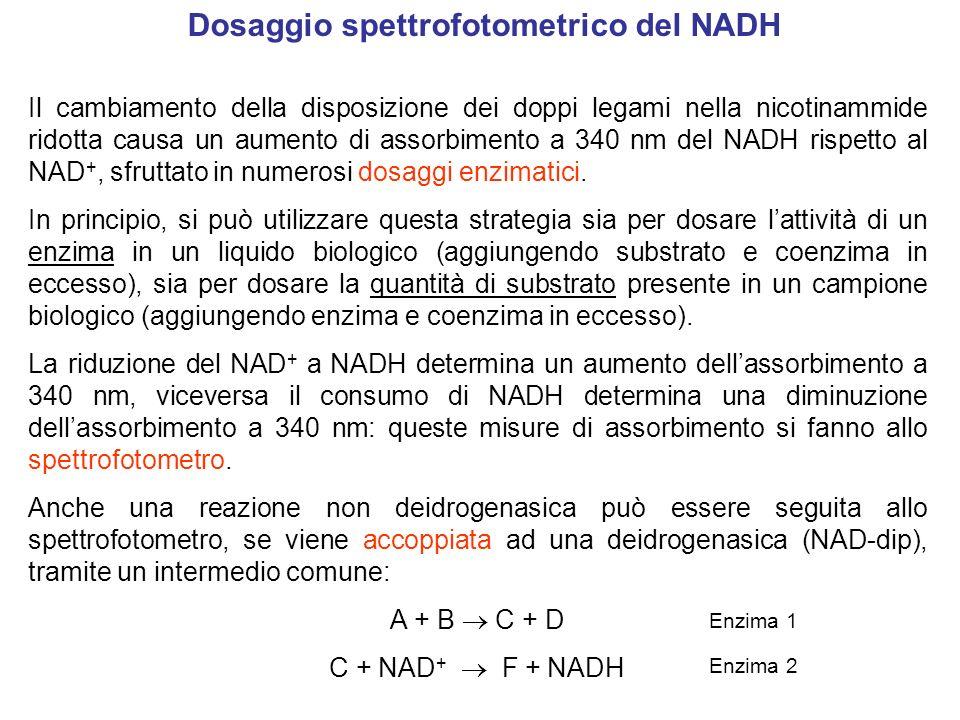 Dosaggio spettrofotometrico del NADH Il cambiamento della disposizione dei doppi legami nella nicotinammide ridotta causa un aumento di assorbimento a