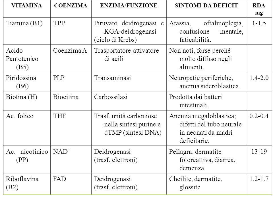 VITAMINACOENZIMAENZIMA/FUNZIONESINTOMI DA DEFICITRDA mg Tiamina (B1)TPPPiruvato deidrogenasi e KGA-deidrogenasi (ciclo di Krebs) Atassia, oftalmoplegi