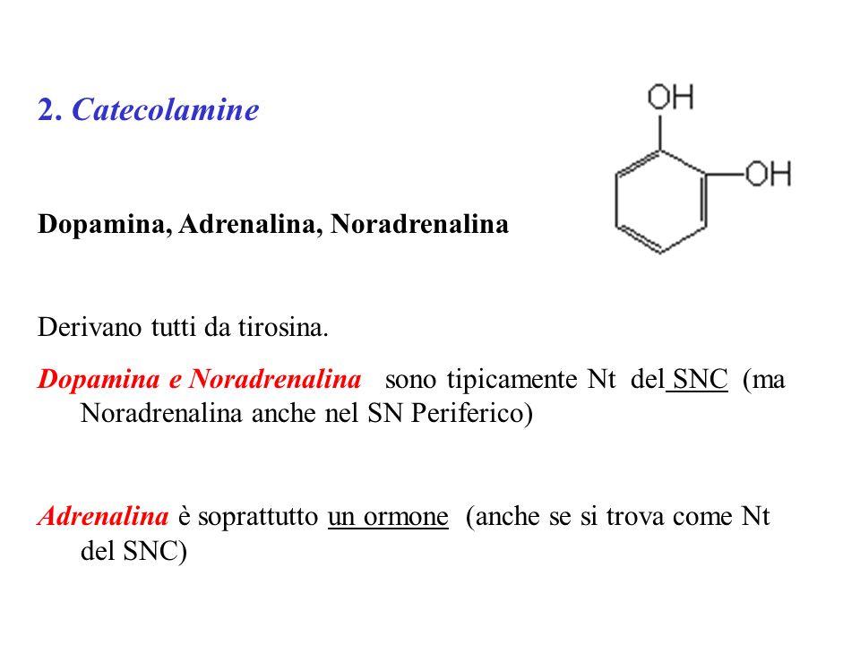 2. Catecolamine Dopamina, Adrenalina, Noradrenalina Derivano tutti da tirosina. Dopamina e Noradrenalina sono tipicamente Nt del SNC (ma Noradrenalina