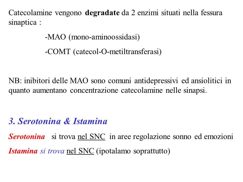 Catecolamine vengono degradate da 2 enzimi situati nella fessura sinaptica : -MAO (mono-aminoossidasi) -COMT (catecol-O-metiltransferasi) NB: inibitor