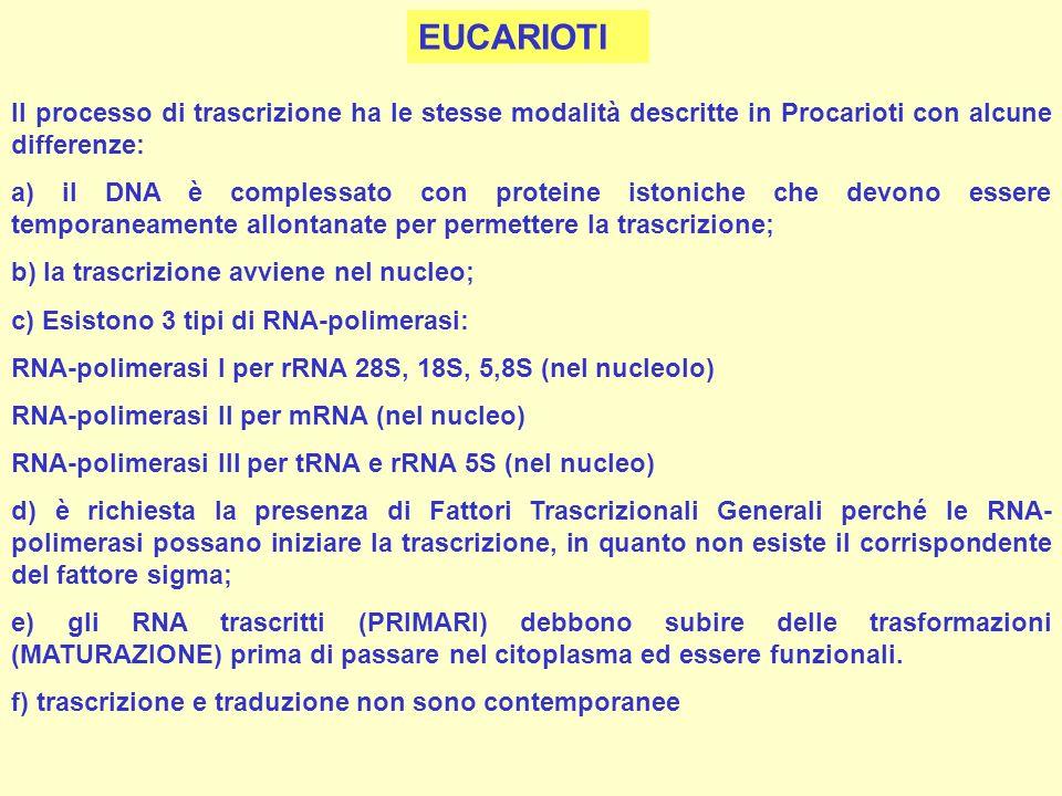 Il processo di trascrizione ha le stesse modalità descritte in Procarioti con alcune differenze: a) il DNA è complessato con proteine istoniche che de