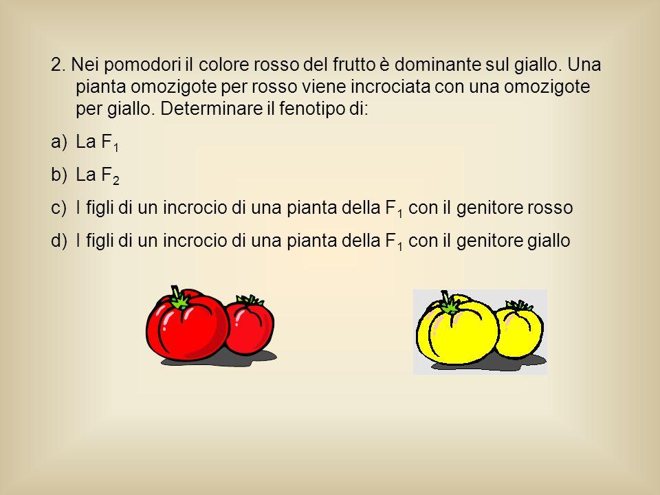 2. Nei pomodori il colore rosso del frutto è dominante sul giallo. Una pianta omozigote per rosso viene incrociata con una omozigote per giallo. Deter