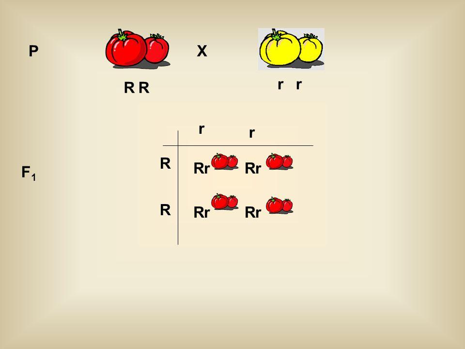 R r PX R r Rr F1F1 R R r r