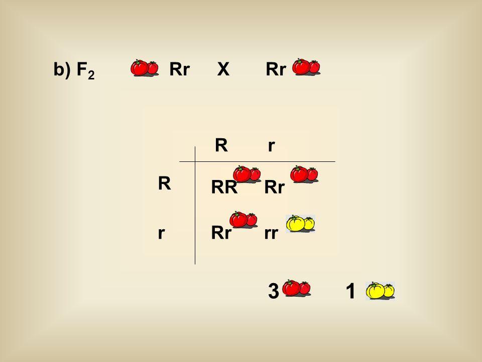 RRRr rr R r rR b) F 2 RrXRr 3 1