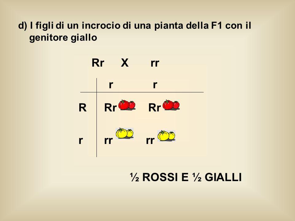 d) I figli di un incrocio di una pianta della F1 con il genitore giallo RrXrr r R r r Rr rr Rr ½ ROSSI E ½ GIALLI
