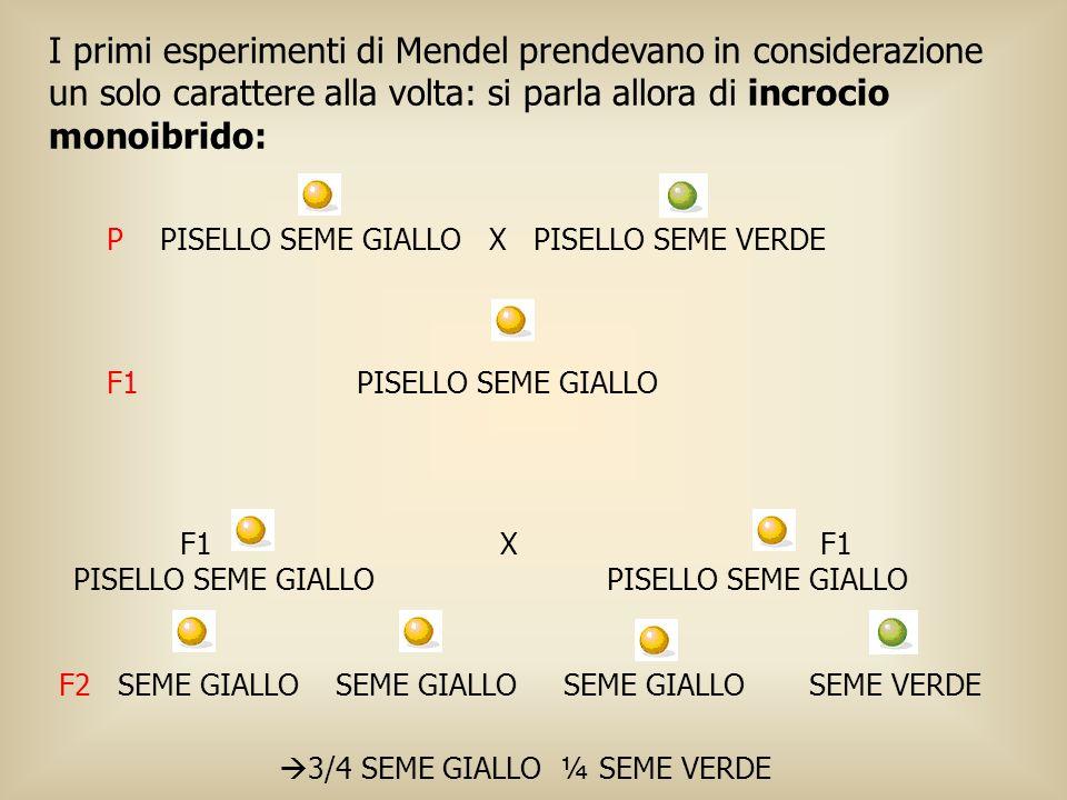 I primi esperimenti di Mendel prendevano in considerazione un solo carattere alla volta: si parla allora di incrocio monoibrido: P PISELLO SEME GIALLO