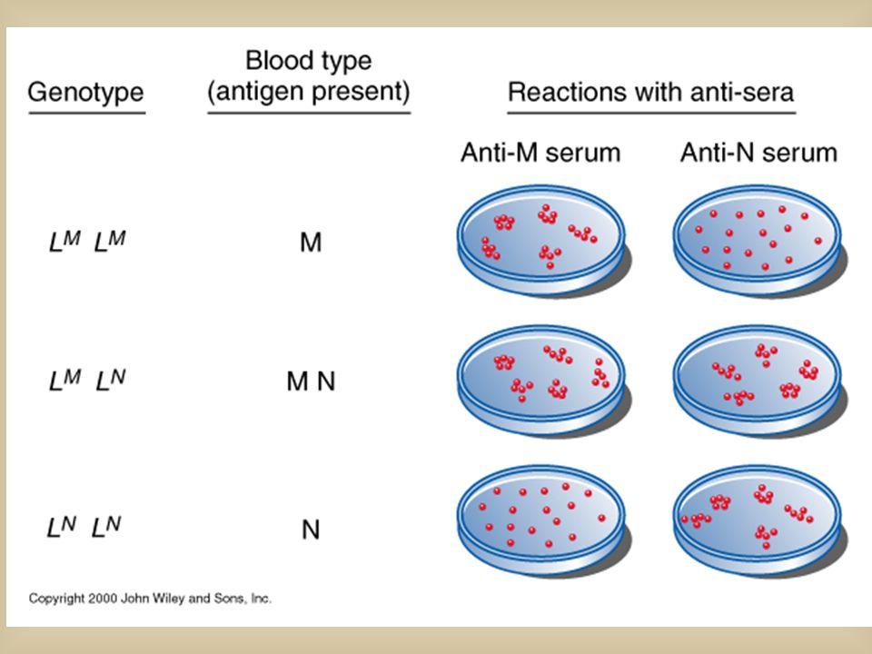 CODOMINANZA: quando leterozigote manifesta entrambi i fenotipi dei 2 omozigoti Es: Sistema gruppo sanguigno MN Fenotipi : MNMN Genotipi: L M L M L N L