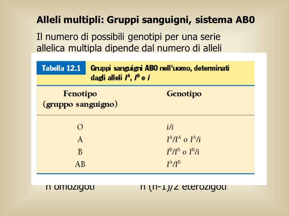 Alleli multipli: Gruppi sanguigni, sistema AB0 Il numero di possibili genotipi per una serie allelica multipla dipende dal numero di alleli implicati.