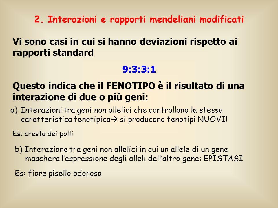 2. Interazioni e rapporti mendeliani modificati a)Interazioni tra geni non allelici che controllano la stessa caratteristica fenotipica si producono f