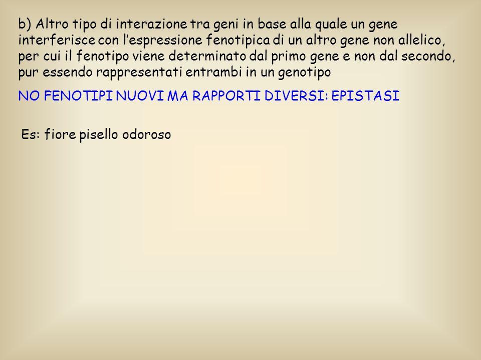 b) Altro tipo di interazione tra geni in base alla quale un gene interferisce con lespressione fenotipica di un altro gene non allelico, per cui il fe