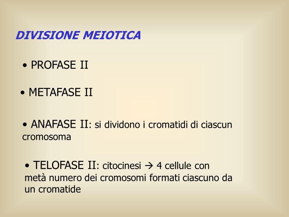 DIVISIONE MEIOTICA METAFASE II ANAFASE II : si dividono i cromatidi di ciascun cromosoma TELOFASE II : citocinesi 4 cellule con metà numero dei cromos