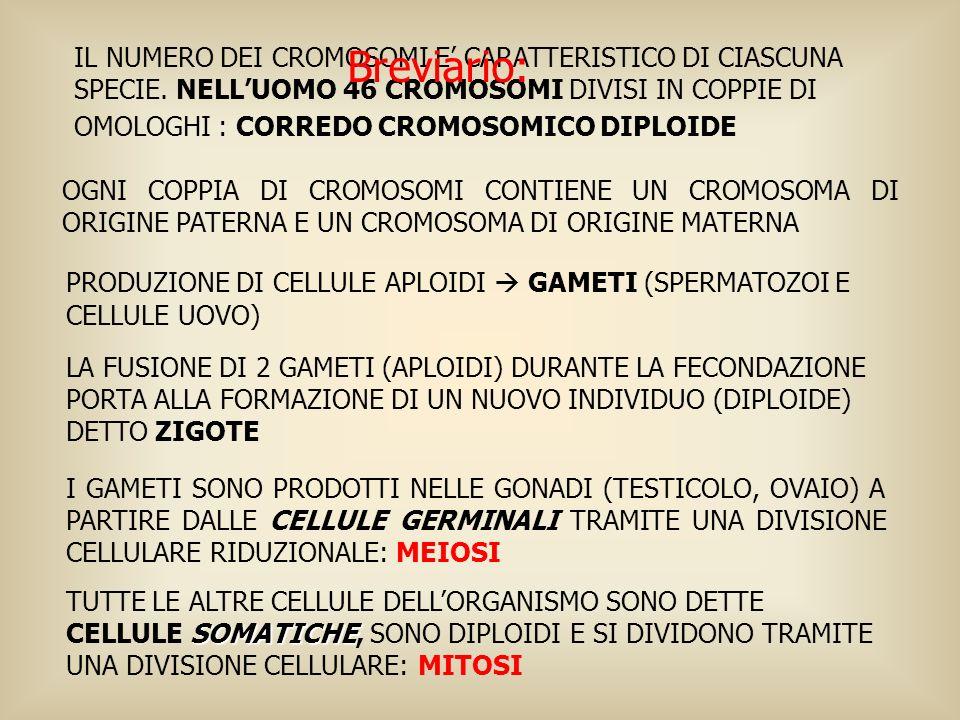 IL NUMERO DEI CROMOSOMI E CARATTERISTICO DI CIASCUNA SPECIE. NELLUOMO 46 CROMOSOMI DIVISI IN COPPIE DI OMOLOGHI : CORREDO CROMOSOMICO DIPLOIDE OGNI CO