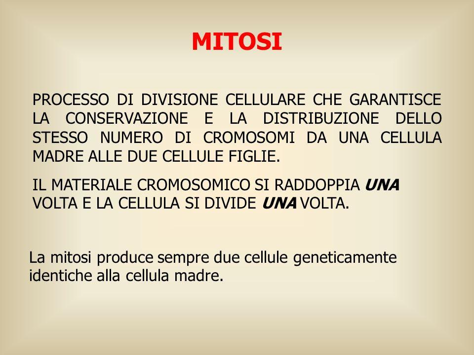 I processi di base della meiosi sono simili a quelli della mitosi, ma presentano 4 importanti differenze: 1.