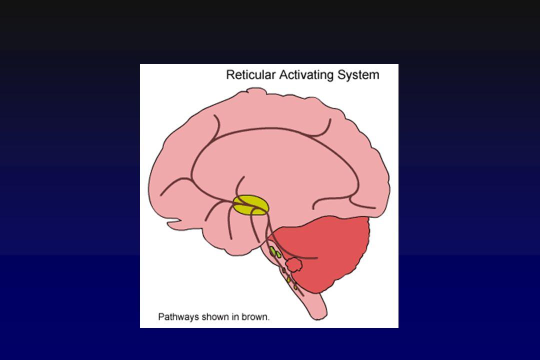 Respirazione Evento cerebro- cardiovascolare Respiro apneustico : pausa di alcuni secondi dopo una inspirazione.