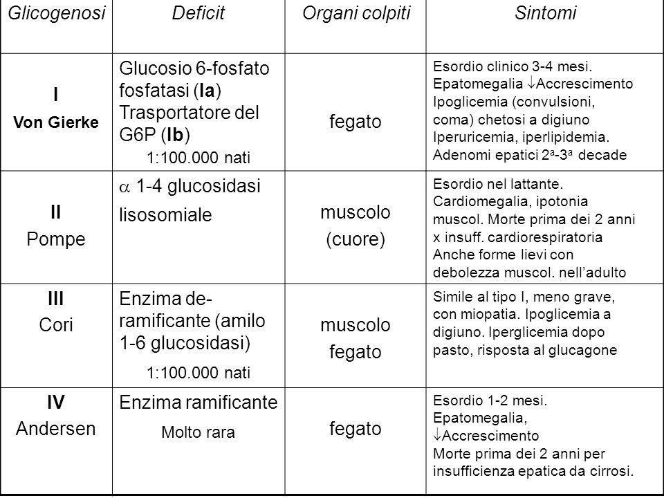 GlicogenosiDeficitOrgani colpitiSintomi I Von Gierke Glucosio 6-fosfato fosfatasi (Ia) Trasportatore del G6P (Ib) 1:100.000 nati fegato Esordio clinic