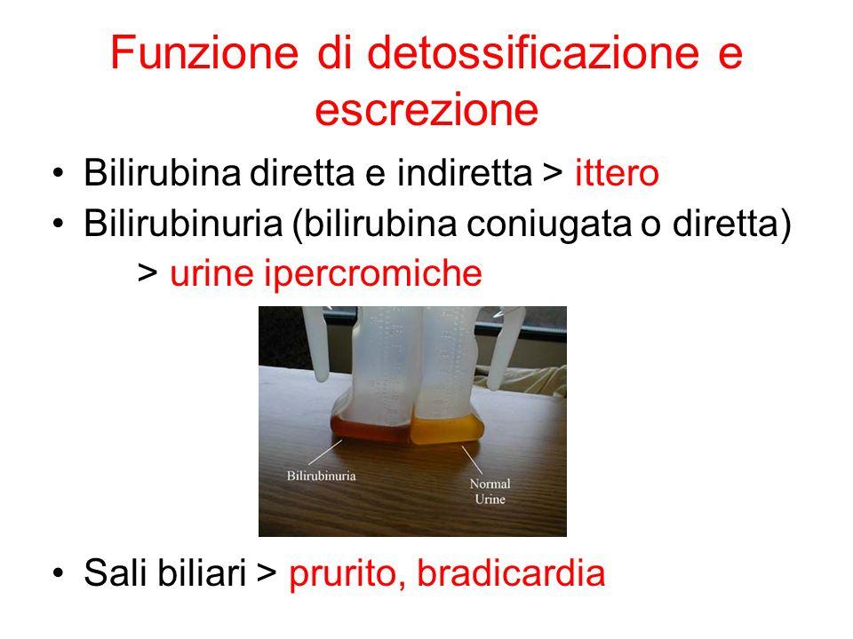 Funzione di detossificazione e escrezione Bilirubina diretta e indiretta > ittero Bilirubinuria (bilirubina coniugata o diretta) > urine ipercromiche