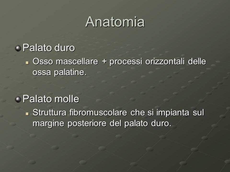 Anatomia Palato duro Osso mascellare + processi orizzontali delle ossa palatine. Osso mascellare + processi orizzontali delle ossa palatine. Palato mo