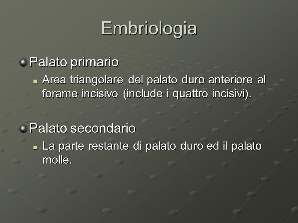 Embriologia Palato primario Area triangolare del palato duro anteriore al forame incisivo (include i quattro incisivi). Area triangolare del palato du