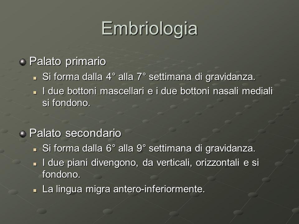 Embriologia Palato primario Si forma dalla 4° alla 7° settimana di gravidanza. Si forma dalla 4° alla 7° settimana di gravidanza. I due bottoni mascel