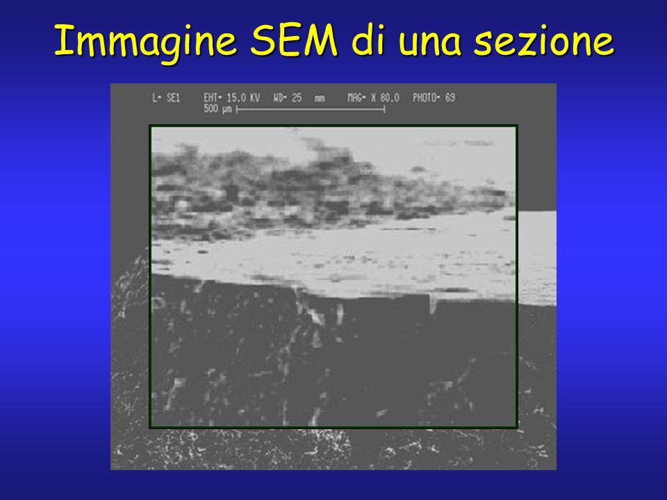 Immagine SEM di una sezione