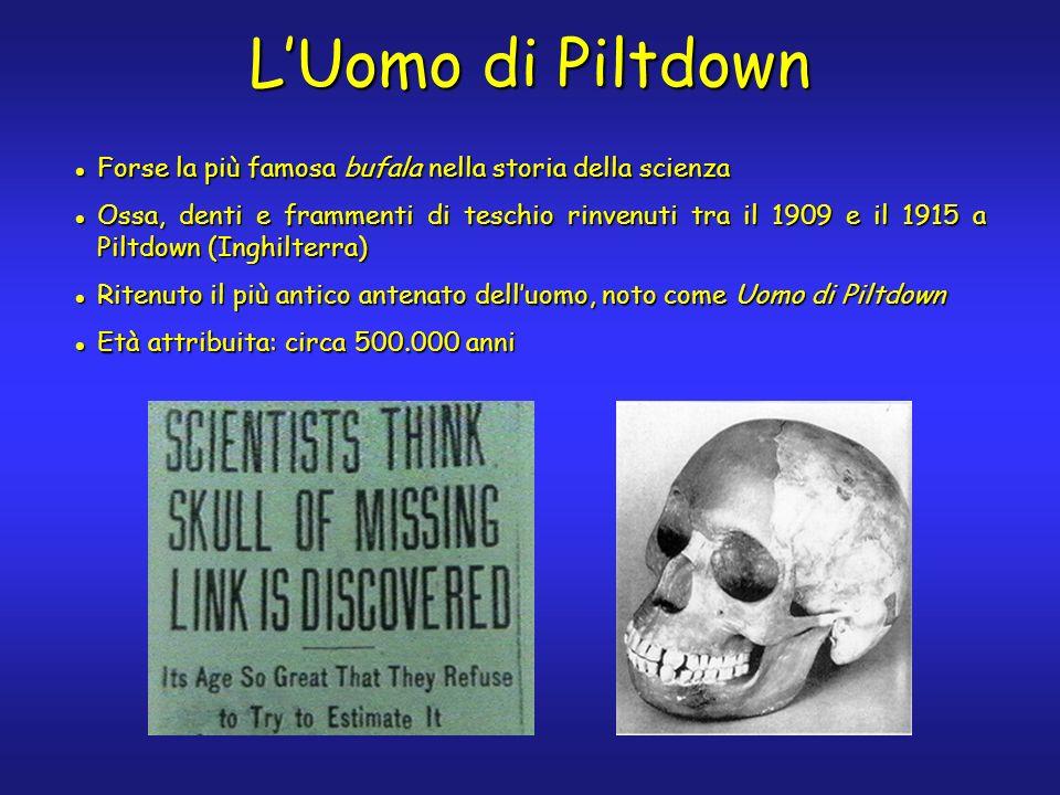 Forse la più famosa bufala nella storia della scienza Forse la più famosa bufala nella storia della scienza Ossa, denti e frammenti di teschio rinvenuti tra il 1909 e il 1915 a Piltdown (Inghilterra) Ossa, denti e frammenti di teschio rinvenuti tra il 1909 e il 1915 a Piltdown (Inghilterra) Ritenuto il più antico antenato delluomo, noto come Uomo di Piltdown Ritenuto il più antico antenato delluomo, noto come Uomo di Piltdown Età attribuita: circa 500.000 anni Età attribuita: circa 500.000 anni LUomo di Piltdown