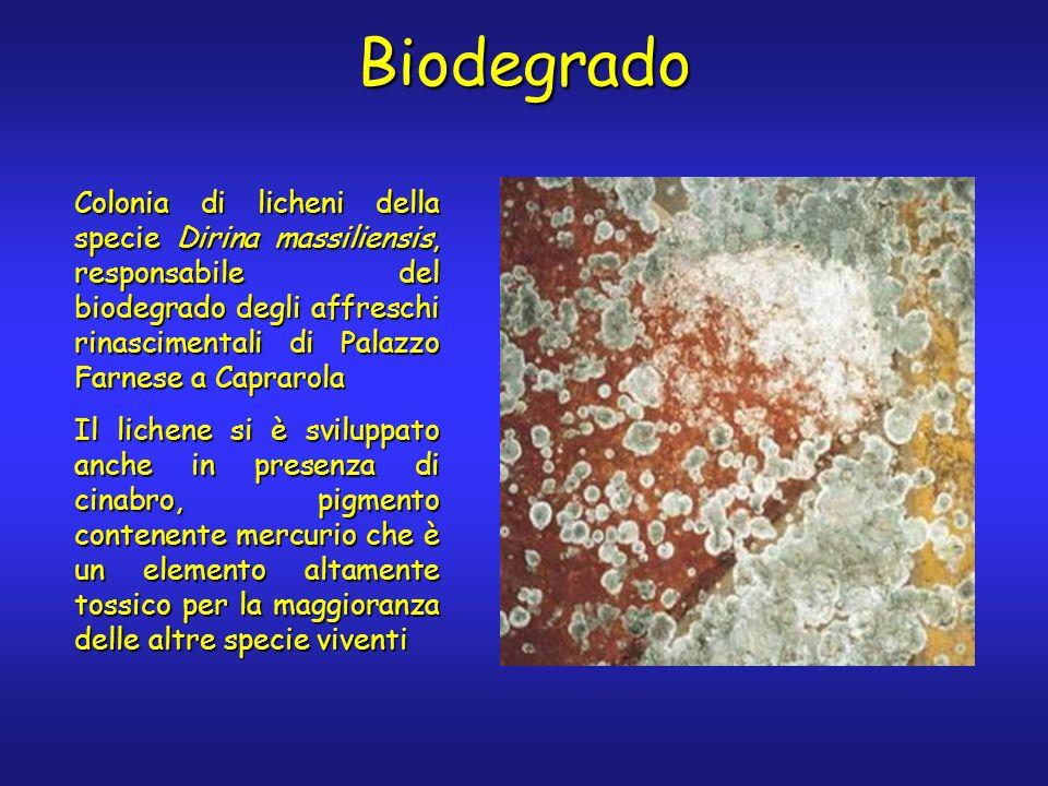 Biodegrado Colonia di licheni della specie Dirina massiliensis, responsabile del biodegrado degli affreschi rinascimentali di Palazzo Farnese a Caprarola Il lichene si è sviluppato anche in presenza di cinabro, pigmento contenente mercurio che è un elemento altamente tossico per la maggioranza delle altre specie viventi
