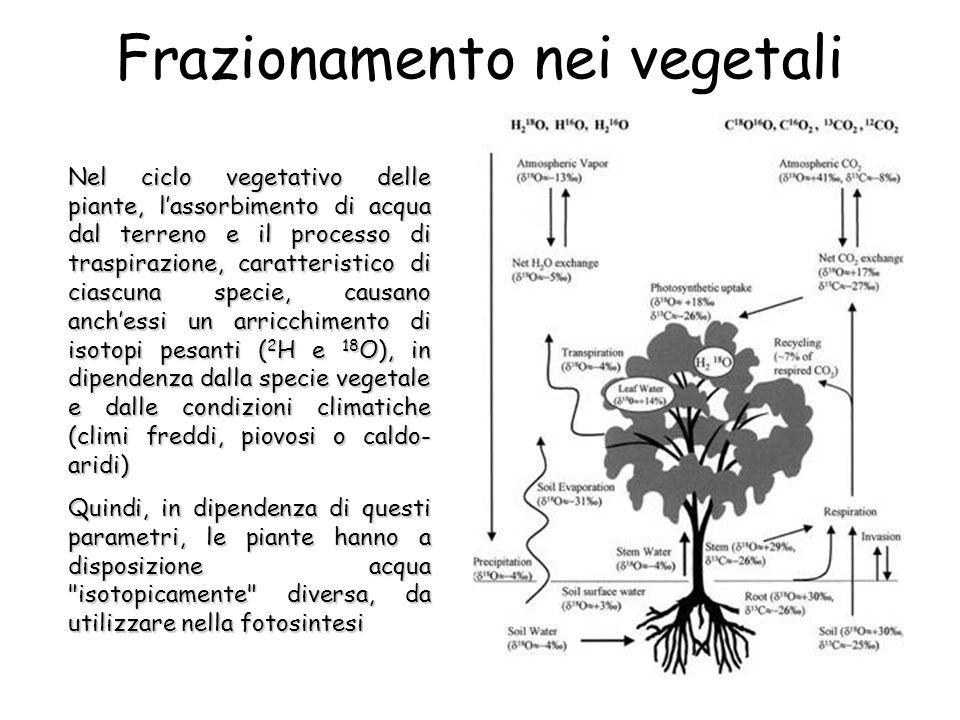Frazionamento nei vegetali Nel ciclo vegetativo delle piante, lassorbimento di acqua dal terreno e il processo di traspirazione, caratteristico di ciascuna specie, causano anchessi un arricchimento di isotopi pesanti ( 2 H e 18 O), in dipendenza dalla specie vegetale e dalle condizioni climatiche (climi freddi, piovosi o caldo- aridi) Quindi, in dipendenza di questi parametri, le piante hanno a disposizione acqua isotopicamente diversa, da utilizzare nella fotosintesi