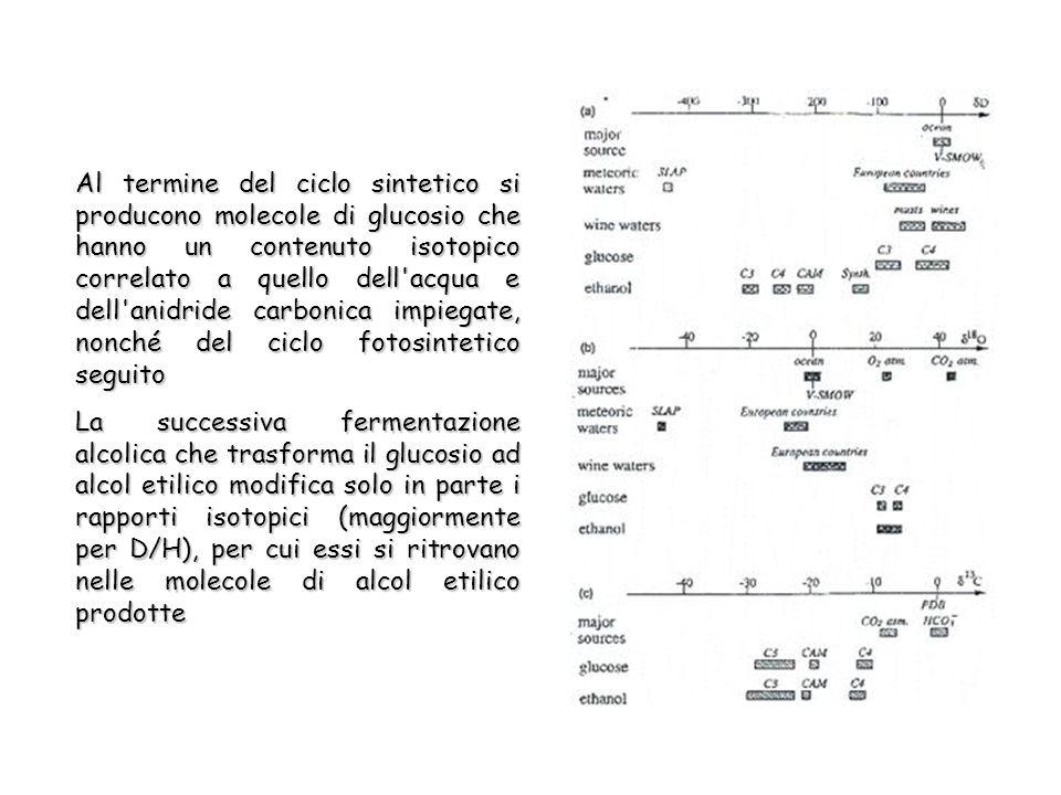 Al termine del ciclo sintetico si producono molecole di glucosio che hanno un contenuto isotopico correlato a quello dell acqua e dell anidride carbonica impiegate, nonché del ciclo fotosintetico seguito La successiva fermentazione alcolica che trasforma il glucosio ad alcol etilico modifica solo in parte i rapporti isotopici (maggiormente per D/H), per cui essi si ritrovano nelle molecole di alcol etilico prodotte