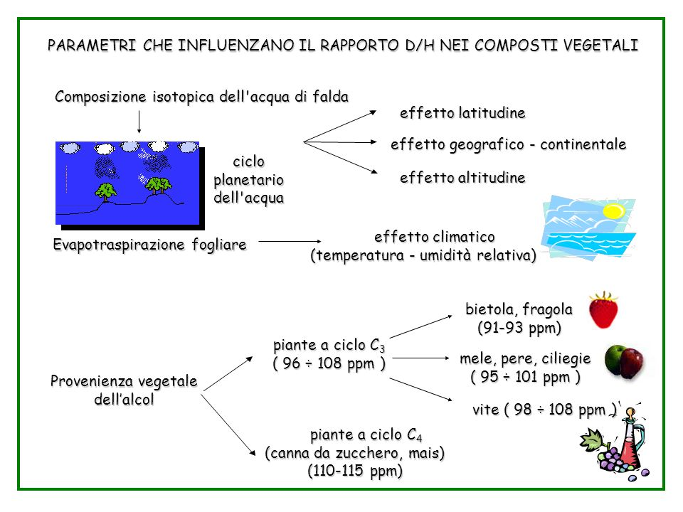 Parametri D/H nei vegetali PARAMETRI CHE INFLUENZANO IL RAPPORTO D/H NEI COMPOSTI VEGETALI Composizione isotopica dell acqua di falda effetto latitudine effetto latitudine ciclo planetario dell acqua effetto geografico - continentale effetto geografico - continentale effetto altitudine effetto altitudine Evapotraspirazione fogliare effetto climatico (temperatura - umidità relativa) effetto climatico (temperatura - umidità relativa) bietola, fragola (91-93 ppm) piante a ciclo C 3 ( 96 ÷ 108 ppm ) mele, pere, ciliegie ( 95 ÷ 101 ppm ) Provenienza vegetale dellalcol vite ( 98 ÷ 108 ppm ) piante a ciclo C 4 (canna da zucchero, mais) (110-115 ppm) piante a ciclo C 4 (canna da zucchero, mais) (110-115 ppm)