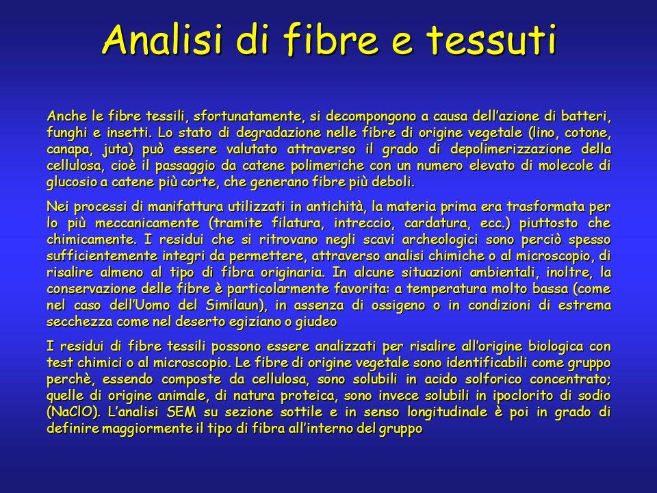Anche le fibre tessili, sfortunatamente, si decompongono a causa dellazione di batteri, funghi e insetti.