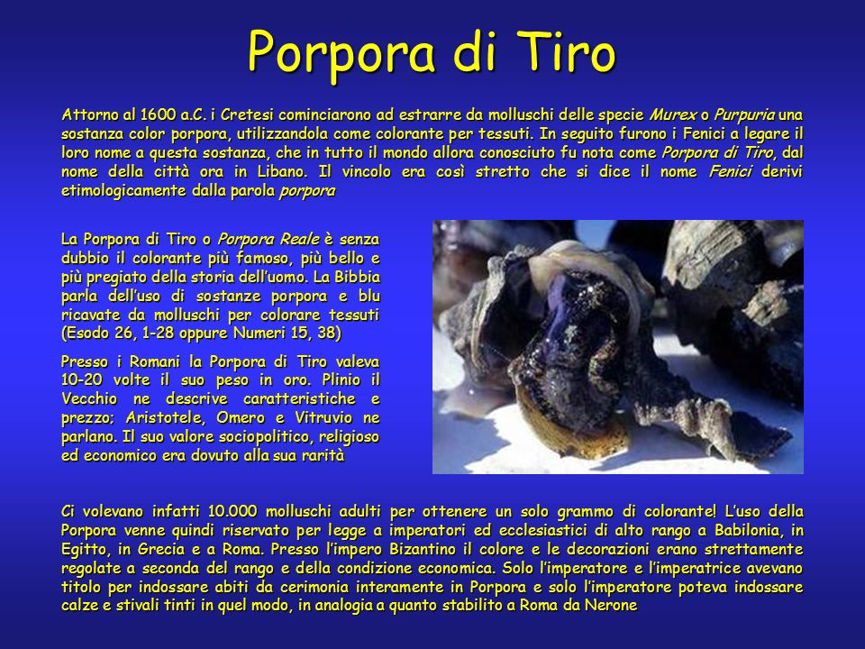 Porpora di Tiro Attorno al 1600 a.C.