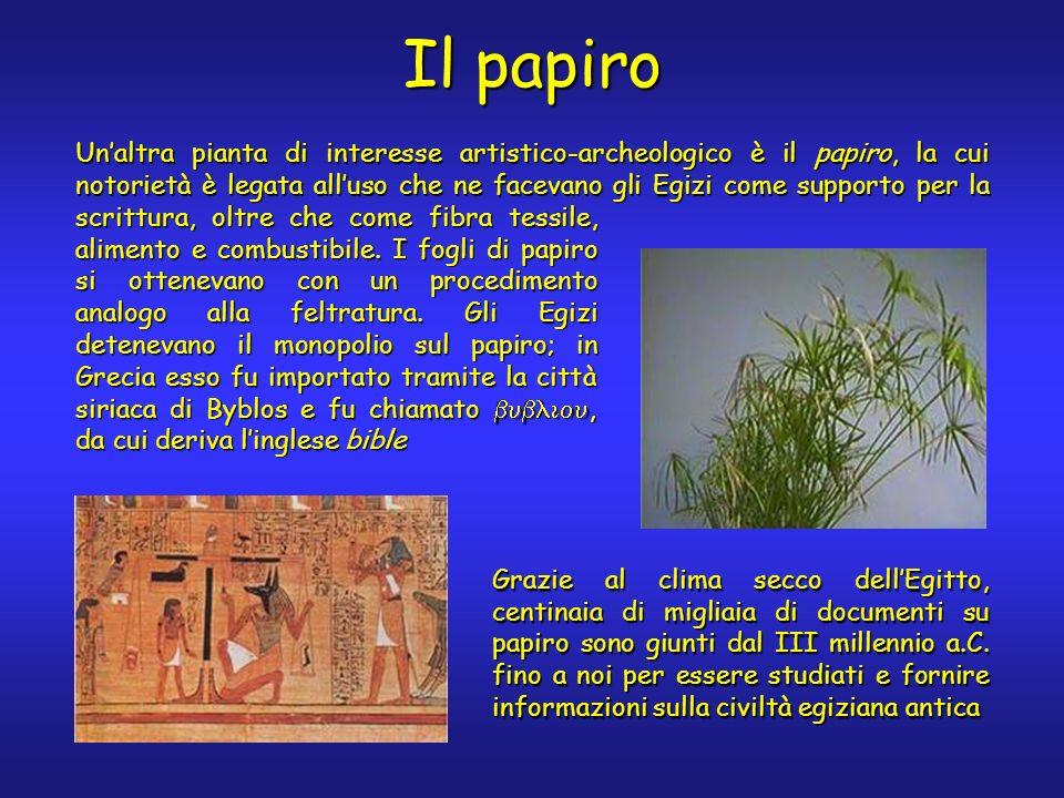 Il papiro Unaltra pianta di interesse artistico-archeologico è il papiro, la cui notorietà è legata alluso che ne facevano gli Egizi come supporto per la scrittura, oltre che come fibra tessile, alimento e combustibile.