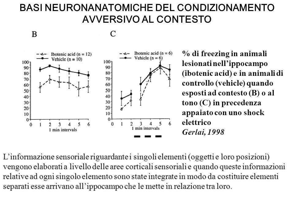 BASI NEURONANATOMICHE DEL CONDIZIONAMENTO AVVERSIVO AL CONTESTO % di freezing in animali lesionati nellippocampo (ibotenic acid) e in animali di contr